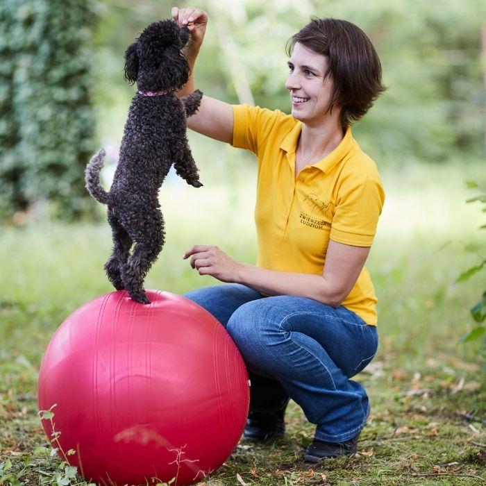 Wykorzystywanie indywidualnych predyspozycji psa